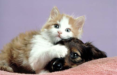kitten_and_puppy