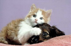 kitten_and_puppy1